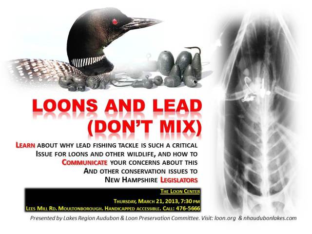 Loons and Lead