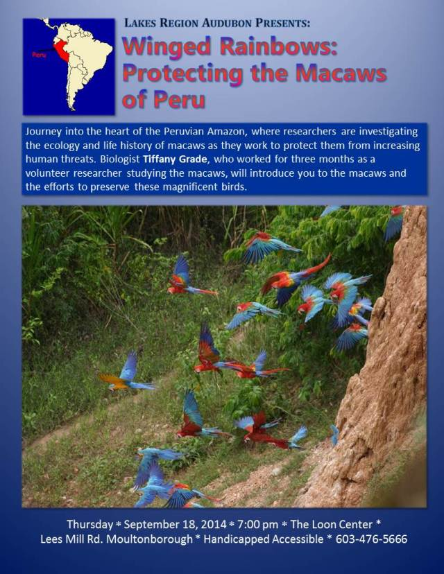 Macaws of Peru Flyer