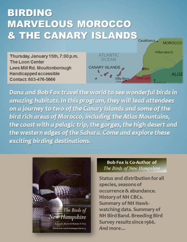 Birding Morocco and Canary Islands
