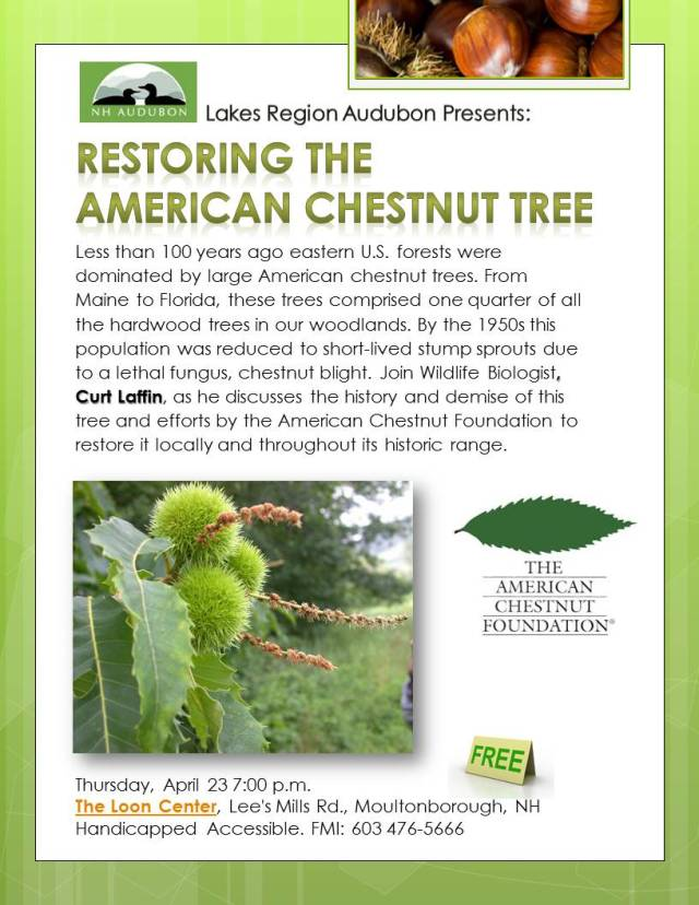 RESTORING the cHESTNUT tREE