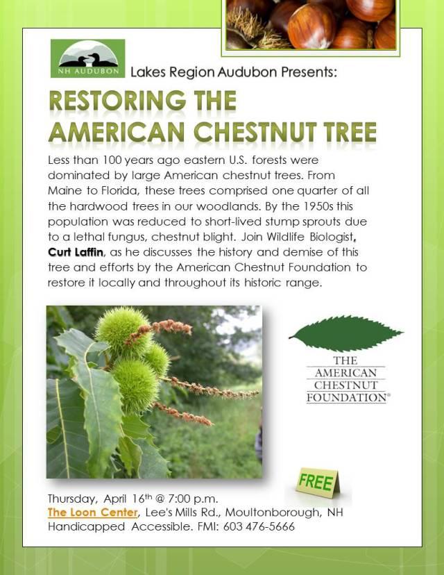 RESTORING_The_CHESTNUT_TREE