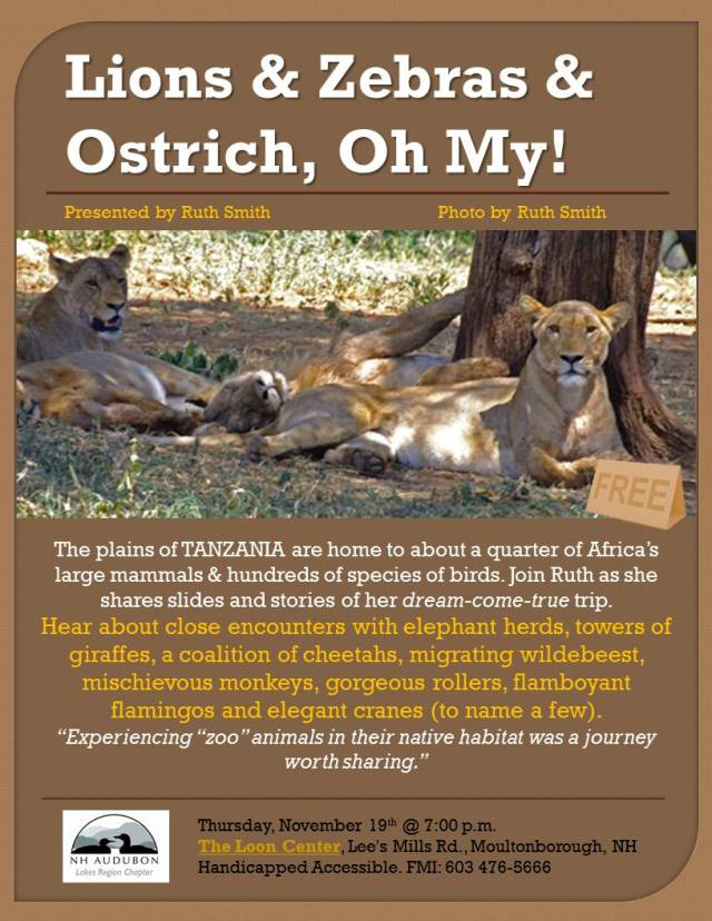 Lions and zebras an Ostrich