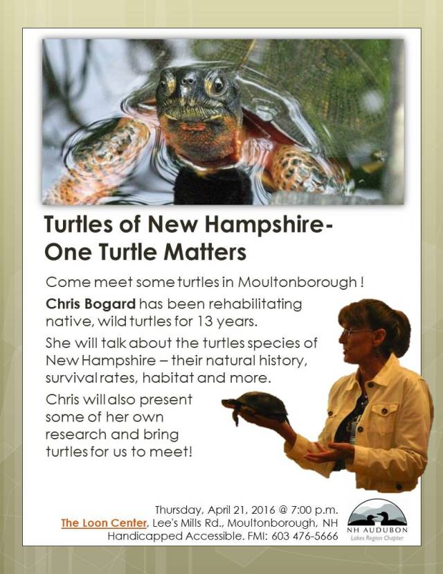 April2016.Flyer.Turtles